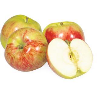 Apfel Gravensteiner